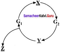 Samacheer Kalvi 11th Bio Botany Solutions Chapter 7 Cell Cycle 5