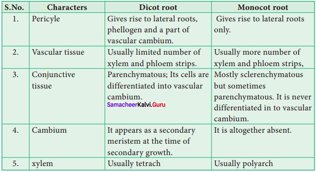 Samacheer Kalvi 11th Bio Botany Solutions Chapter 9 Tissue and Tissue System 2