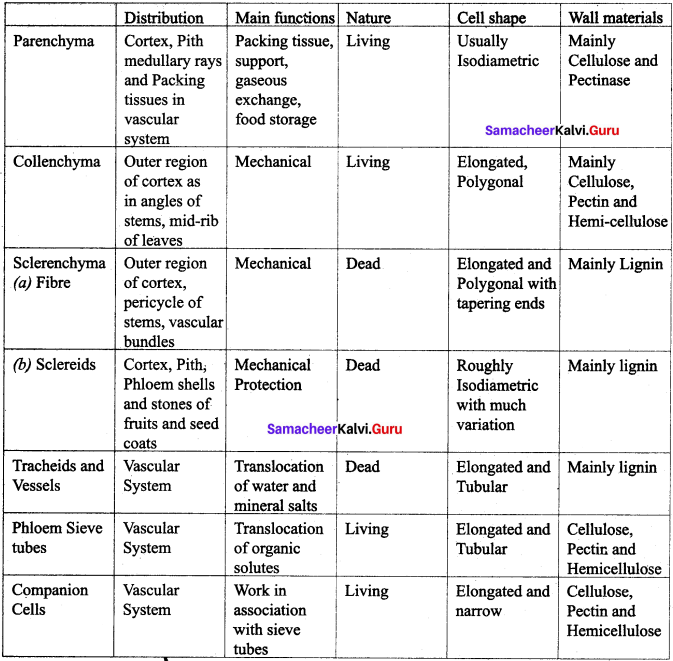 Samacheer Kalvi 11th Bio Botany Solutions Chapter 9 Tissue and Tissue System 5