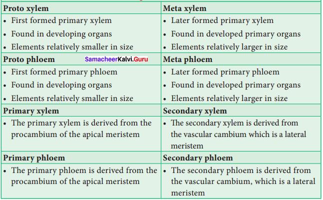 Samacheer Kalvi 11th Bio Botany Solutions Chapter 9 Tissue and Tissue System 6