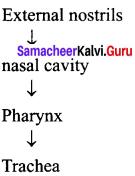 Samacheer Kalvi 11th Bio Zoology Solutions Chapter 6 Respiration img 1