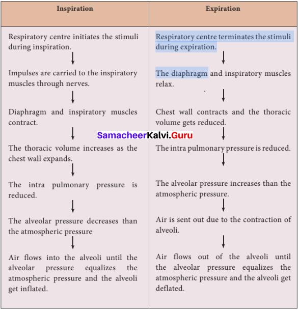 Samacheer Kalvi 11th Bio Zoology Solutions Chapter 6 Respiration img 6