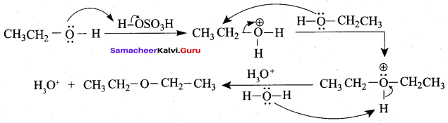 Samacheer Kalvi 12th Chemistry Solutions Chapter 11 Hydroxy Compounds and Ethers-216
