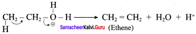 Samacheer Kalvi 12th Chemistry Solutions Chapter 11 Hydroxy Compounds and Ethers-38