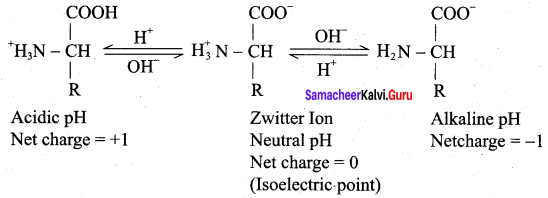 Samacheer Kalvi 12th Chemistry Solutions Chapter 14 Biomolecules-36