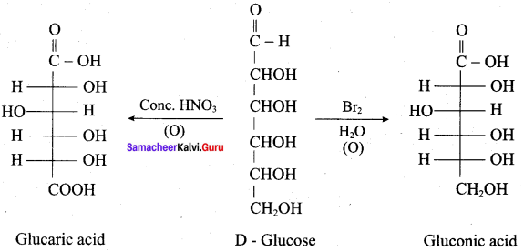 Samacheer Kalvi 12th Chemistry Solutions Chapter 14 Biomolecules-62