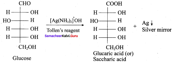 Samacheer Kalvi 12th Chemistry Solutions Chapter 14 Biomolecules-63