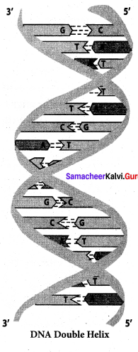 Samacheer Kalvi 12th Chemistry Solutions Chapter 14 Biomolecules-77