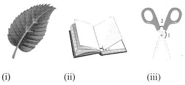 Samacheer Kalvi 7th Maths Solutions Term 1 Chapter 5 Geometry Intext Questions 81