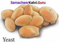 Samacheer Kalvi 8th Science Solutions Term 1 Chapter 7 Plant Kingdom 3