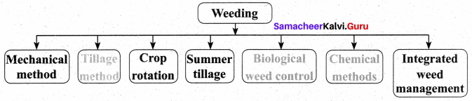 Samacheer Kalvi 8th Science Solutions Term 3 Chapter 7 Crop Production and Management