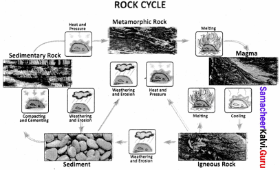 Samacheer Kalvi 8th Social Science Geography Term 1 Solutions Chapter 1 Rock and Soil 13