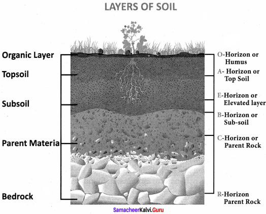 Samacheer Kalvi 8th Social Science Geography Term 1 Solutions Chapter 1 Rock and Soil 6