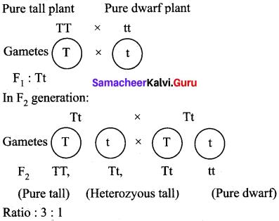 Samacheer Kalvi 10th Science Model Question Paper 5 English Medium image - 9