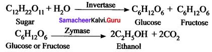 Characteristics Of Homologous Series Class 11 Samacheer Kalvi