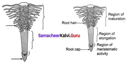 Transportation In Plants And Circulation In Animals Class 10 Samacheer Kalvi