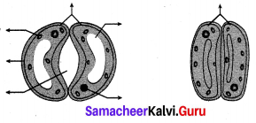 Transportation In Plants And Circulation In Animals Book Back Answers Samacheer Kalvi 10th Science