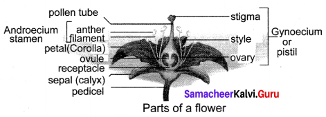Samacheer Kalvi 10th Science Solutions Chapter 17 Reproduction in Plants and Animals 15