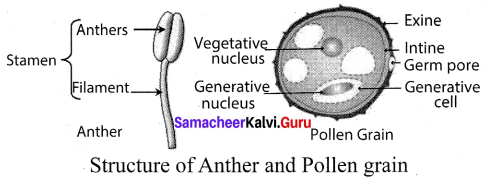 Samacheer Kalvi 10th Science Solutions Chapter 17 Reproduction in Plants and Animals 16