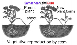 Samacheer Kalvi 10th Science Solutions Chapter 17 Reproduction in Plants and Animals 9