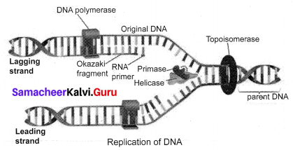 Samacheer Kalvi 10th Science Solutions Chapter 18 Heredity 10