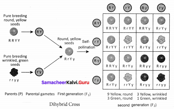 Samacheerkalvi.Guru Science Chapter 18 Heredity