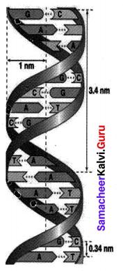 Samacheer Kalvi Guru Science Chapter 18 Heredity