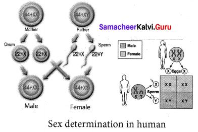 Samacheerkalvi.Guru 10th Science Chapter 18 Heredity