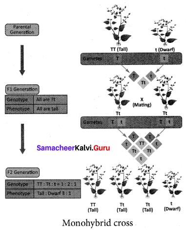 Samacheer Kalvi 10th Science Solutions Chapter 18 Heredity 7
