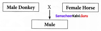 Samacheer Kalvi 10th Science Solutions Chapter 20 Breeding and Biotechnology 4