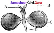 Samacheer Kalvi Guru 12th Bio Botany