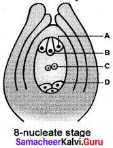 Botany Class 12 Chapter 1 Samacheer Kalvi