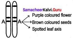 Samacheer Kalvi 12th Bio Botany Solutions Chapter 2 Classical Genetics img 9