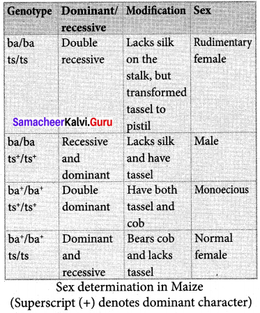 Samacheer Kalvi 12th Bio Botany Solutions Chapter 3 Chromosomal Basis of Inheritance img 10