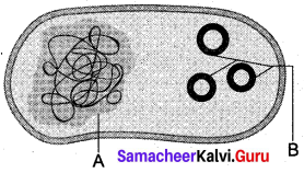 Samacheer Kalvi 12th Bio Botany Solutions Chapter 4 Principles and Processes of Biotechnology img 3