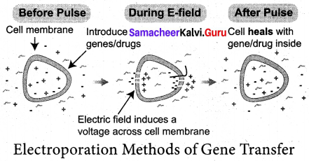 Samacheer Kalvi 12th Bio Botany Solutions Chapter 4 Principles and Processes of Biotechnology img 6