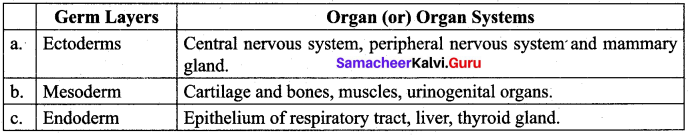 Samacheer Kalvi 12th Bio Zoology Solutions Chapter 2 Human Reproduction img 16