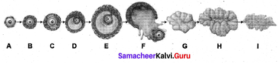Samacheer Kalvi Guru 12th Bio Zoology Chapter 2