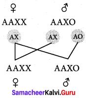 Samacheer Kalvi 12th Bio Zoology Solutions Chapter 4 Principles of Inheritance and Variation img 10
