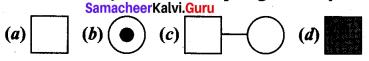 Samacheer Kalvi 12th Bio Zoology Solutions Chapter 4 Principles of Inheritance and Variation img 6