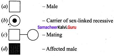 Samacheer Kalvi 12th Bio Zoology Solutions Chapter 4 Principles of Inheritance and Variation img 7