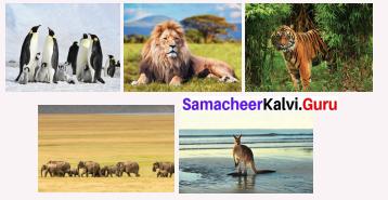 Samacheer Kalvi 6th Social Term 2 Chapter 1 Resources