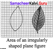 Samacheer Kalvi 7th Science Solutions Term 1 Chapter 1 Measurement