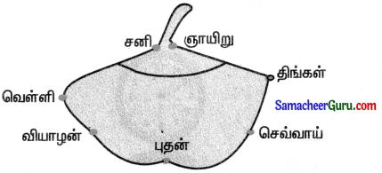 Samacheer Kalvi 3rd Maths Guide Term 1 Chapter 5 காலம் 14