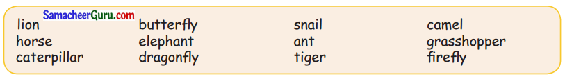 Samacheer Kalvi 3rd English Guide Term 1 Chapter 2 The Insects 11