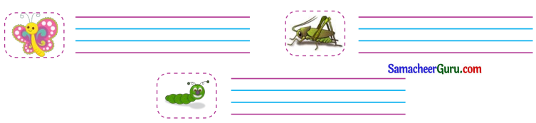 Samacheer Kalvi 3rd English Guide Term 1 Chapter 2 The Insects 13