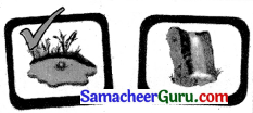 Samacheer Kalvi 3rd English Guide Term 1 Chapter 2 The Insects 2