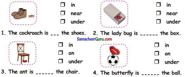 Samacheer Kalvi 3rd English Guide Term 1 Chapter 2 The Insects 24