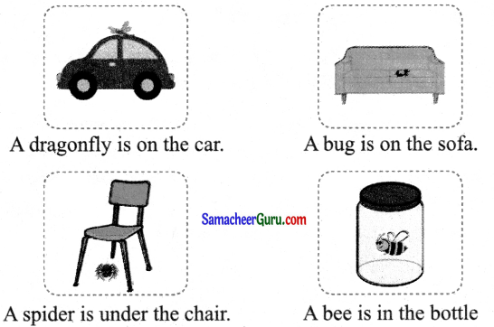 Samacheer Kalvi 3rd English Guide Term 1 Chapter 2 The Insects 29