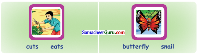 Samacheer Kalvi 3rd English Guide Term 1 Chapter 2 The Insects 33